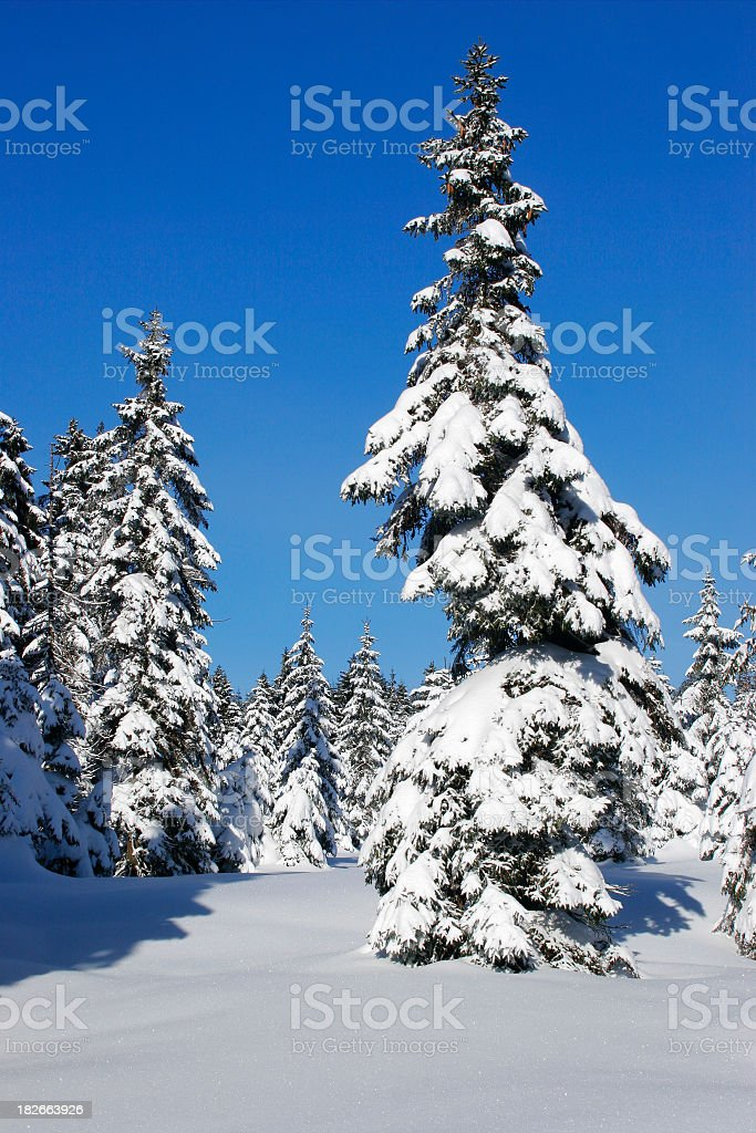 Winter Forest XIV royalty-free stock photo