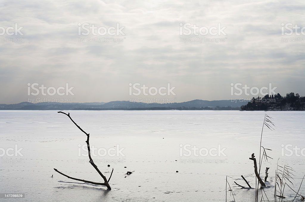 winter freeze lake with trunks and cloudy sky royalty-free stock photo