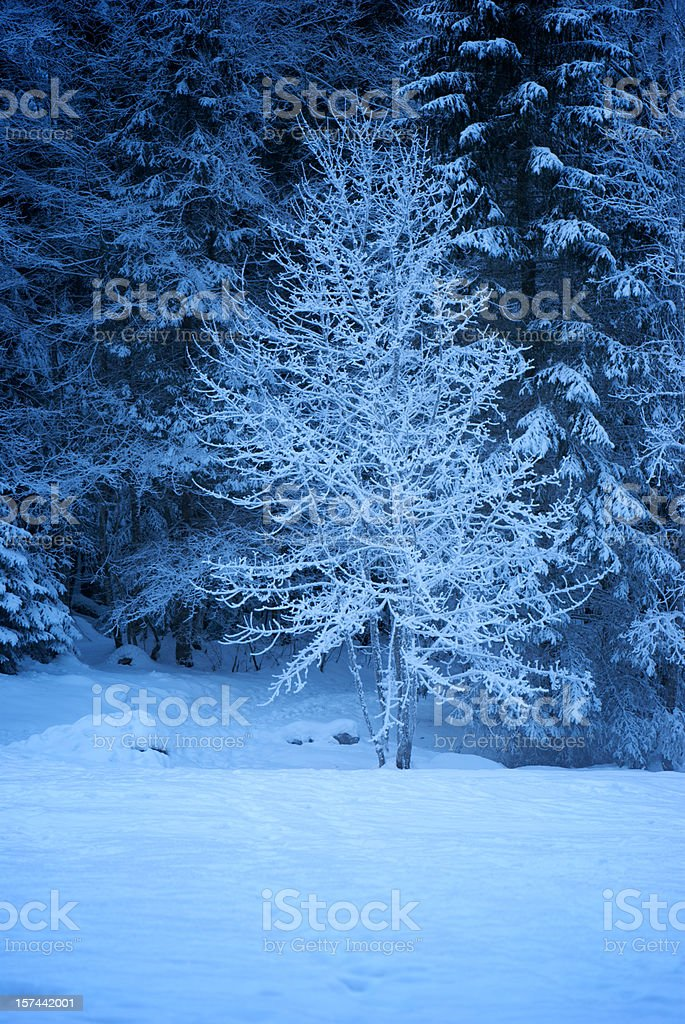 Winter Frozen Evening in the Forest with Snow royalty-free stock photo