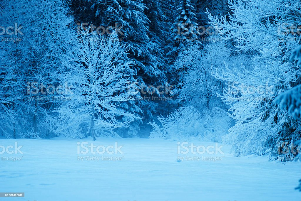 Winter Frozen Evening with Snow royalty-free stock photo
