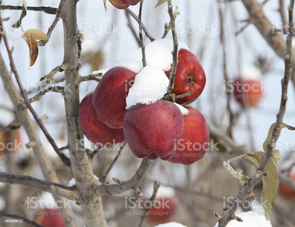 Winter fruit stock photo