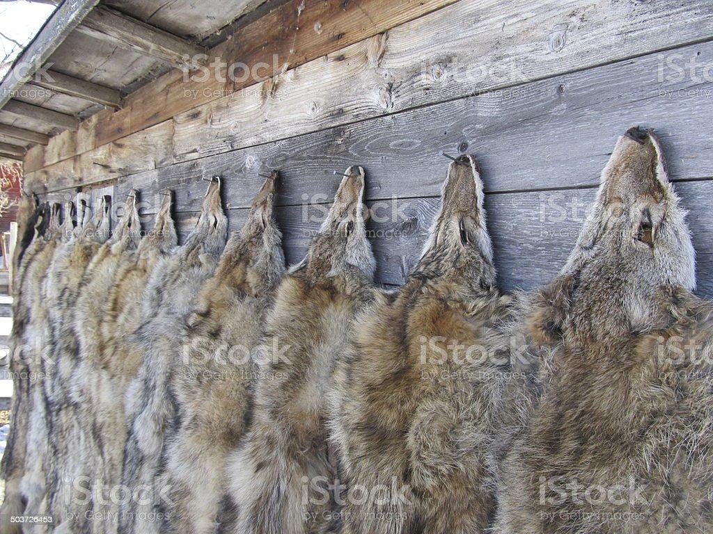 Winter Fur stock photo