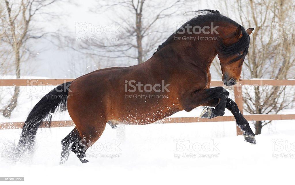 Winter gallop stock photo