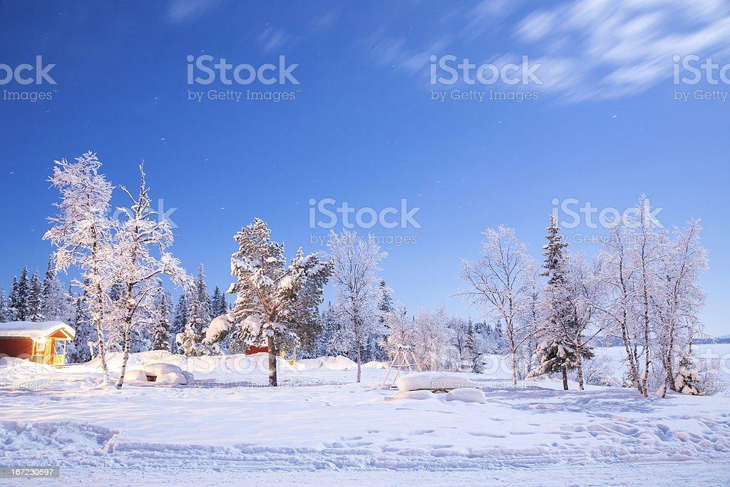Winter garden at night royalty-free stock photo