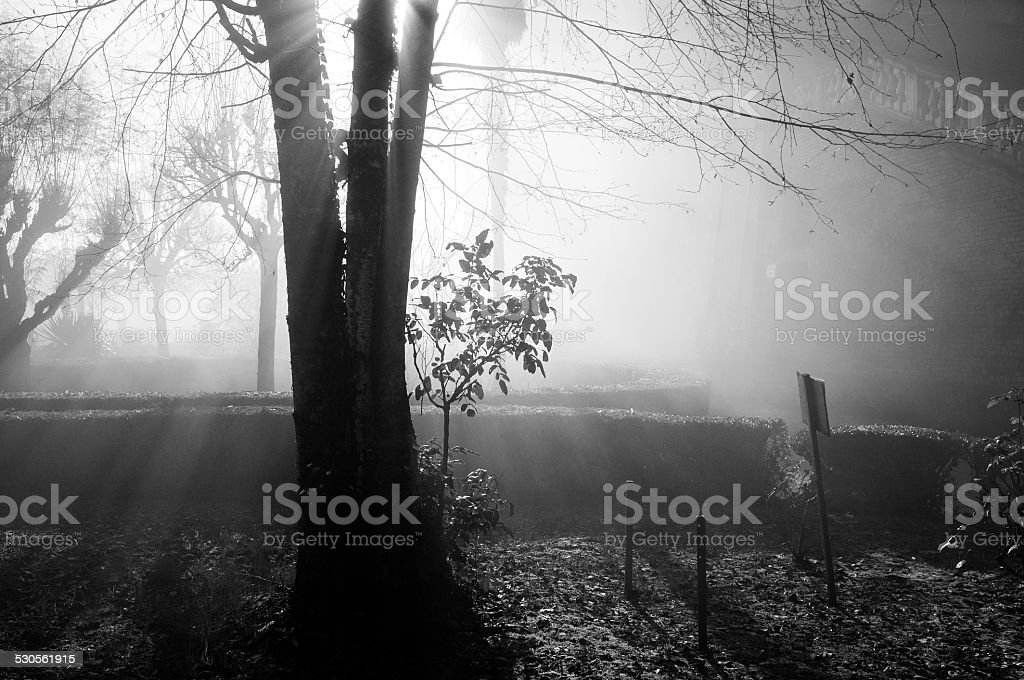 Winter garden in a foggy day, backlight. BW image stock photo