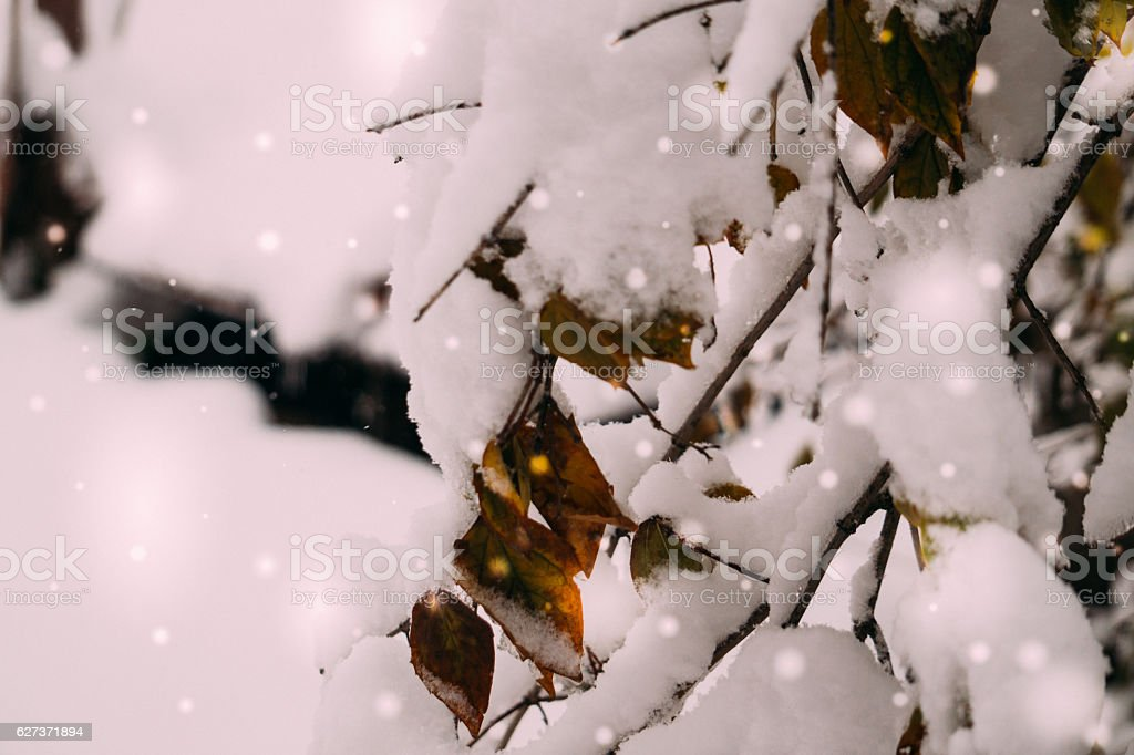 Winter garden. The natural beauty of wild nature stock photo
