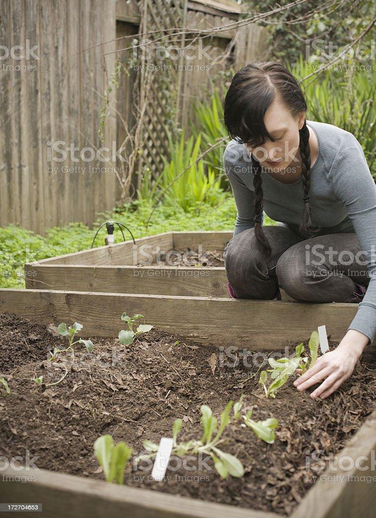 winter gardening stock photo