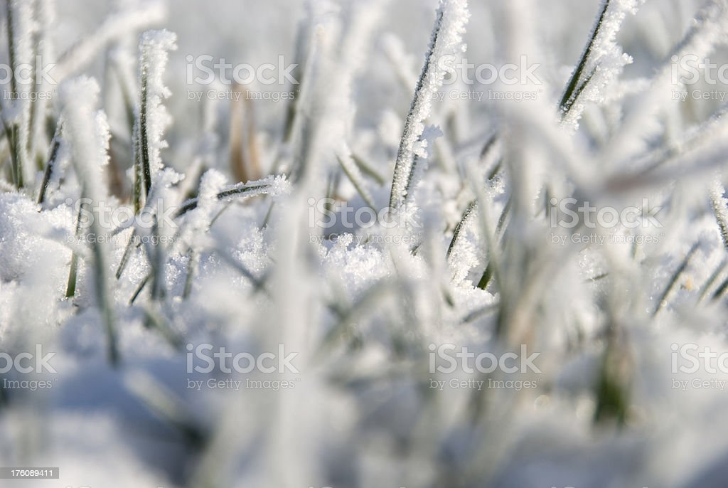 Winter grass stock photo