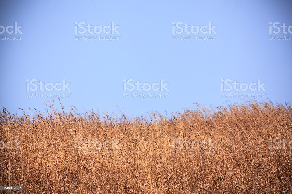 Winter grassland stock photo