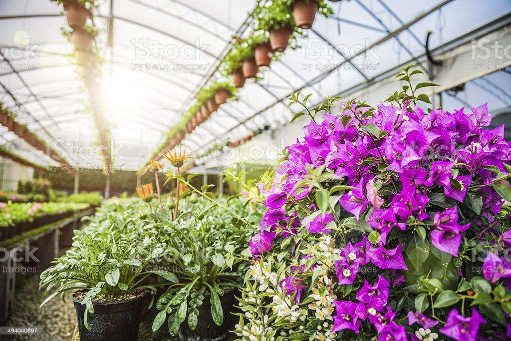 Winter greenhouse farming stock photo