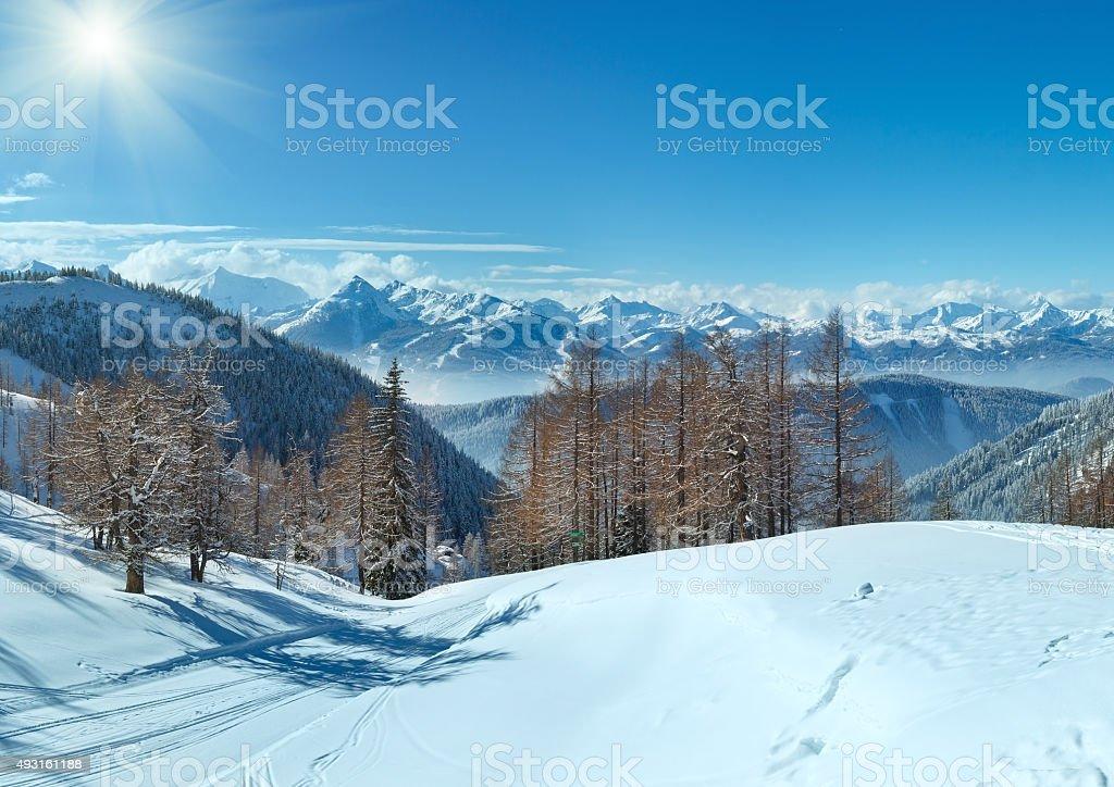 Winter grove near Dachstein mountain massif stock photo