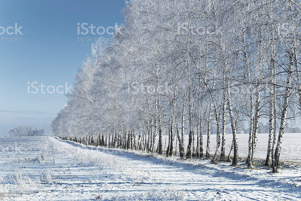 Winter grove royalty-free stock photo