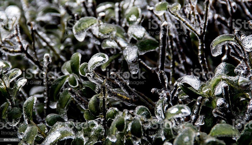 Winter hedge stock photo