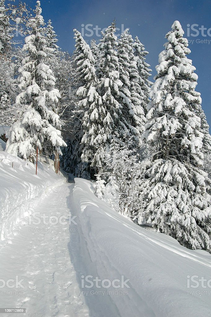 Winter Hiking Trail stock photo