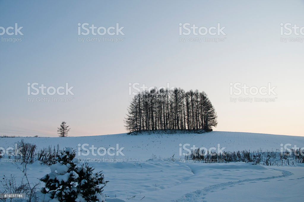 Winter hill and Japanese larch forest stock photo