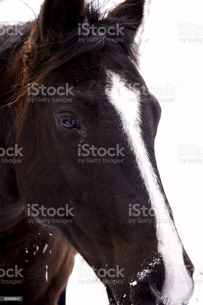 winter horse royalty-free stock photo