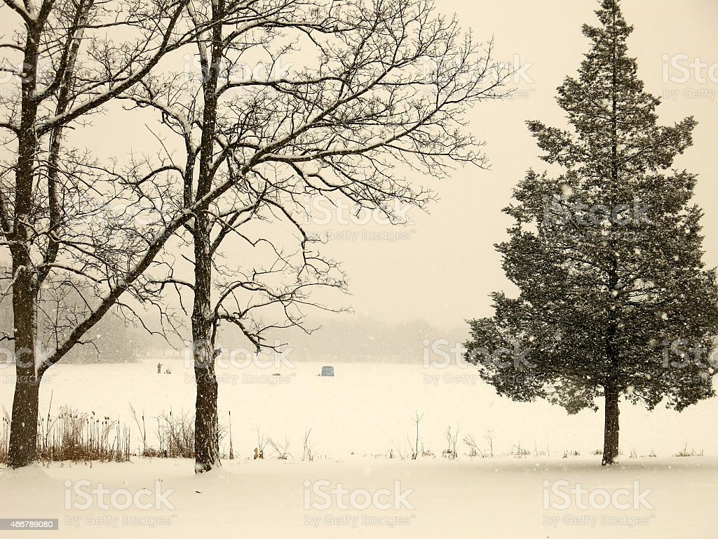 Winter Ice Fisherman and Tent with Pine and Maple Trees stock photo