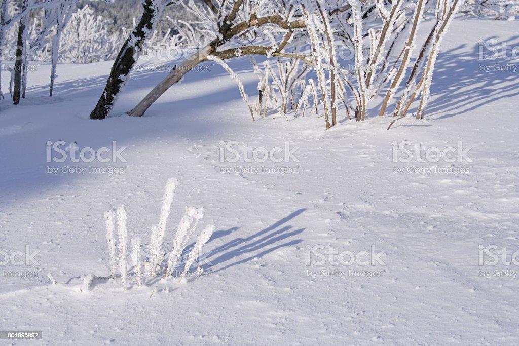 Winter impression on the Feldberg in Taunus. Germany stock photo