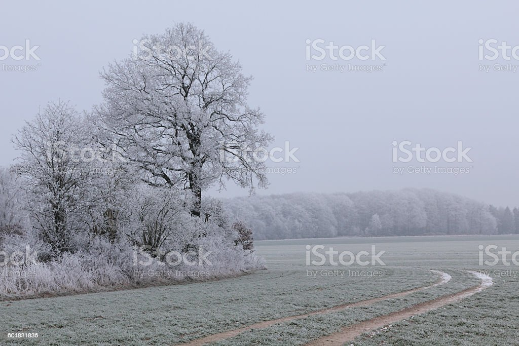 Winter impression with hoar frost. stock photo