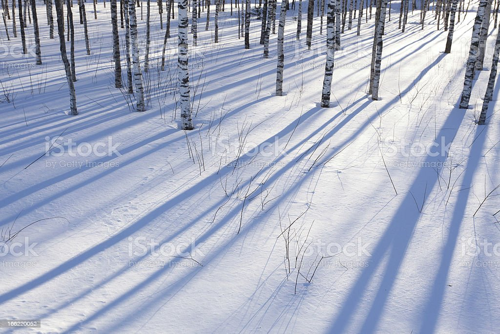 Winter in a birchwood royalty-free stock photo