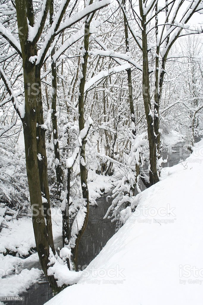 Winter in a wooded stream royalty-free stock photo