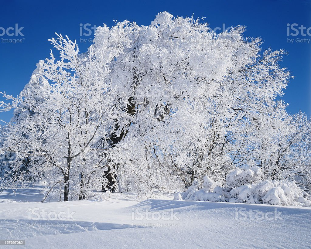 Winter In California   (Pg) royalty-free stock photo