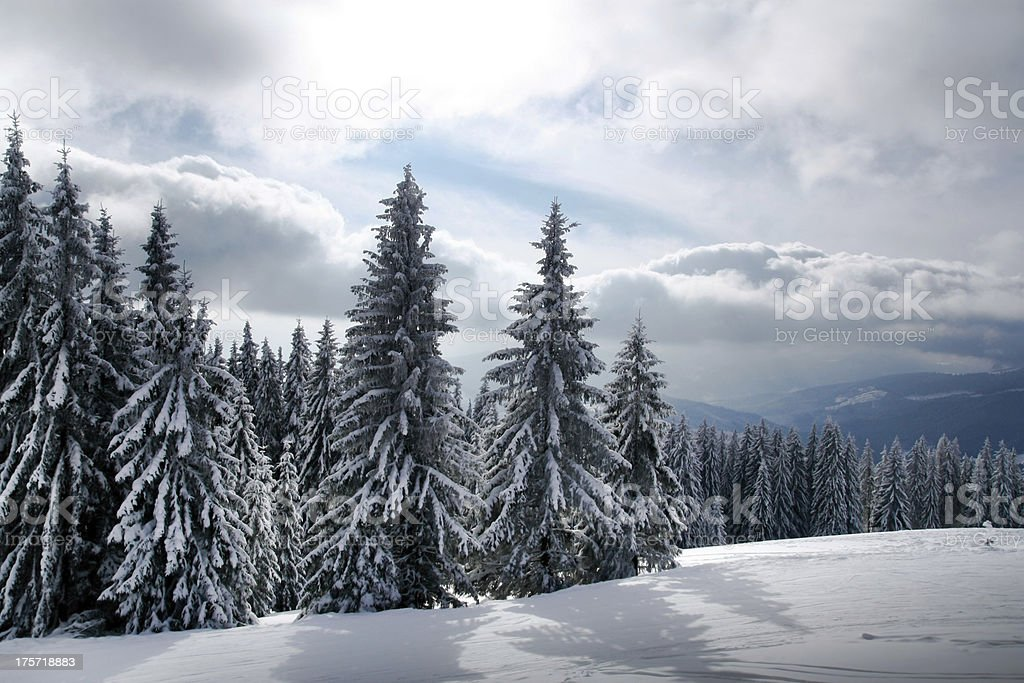 Winter in Carpathian mountains royalty-free stock photo