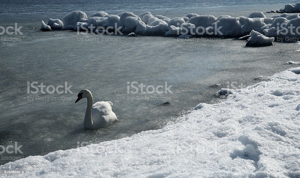 winter in denmark royalty-free stock photo