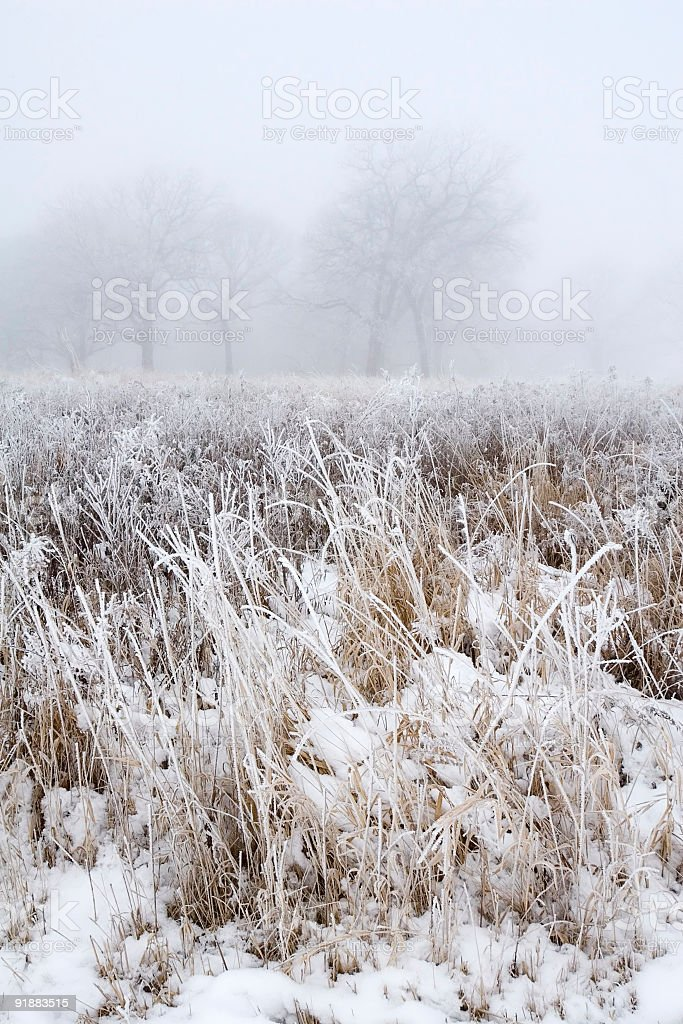 Winter in Illinois stock photo