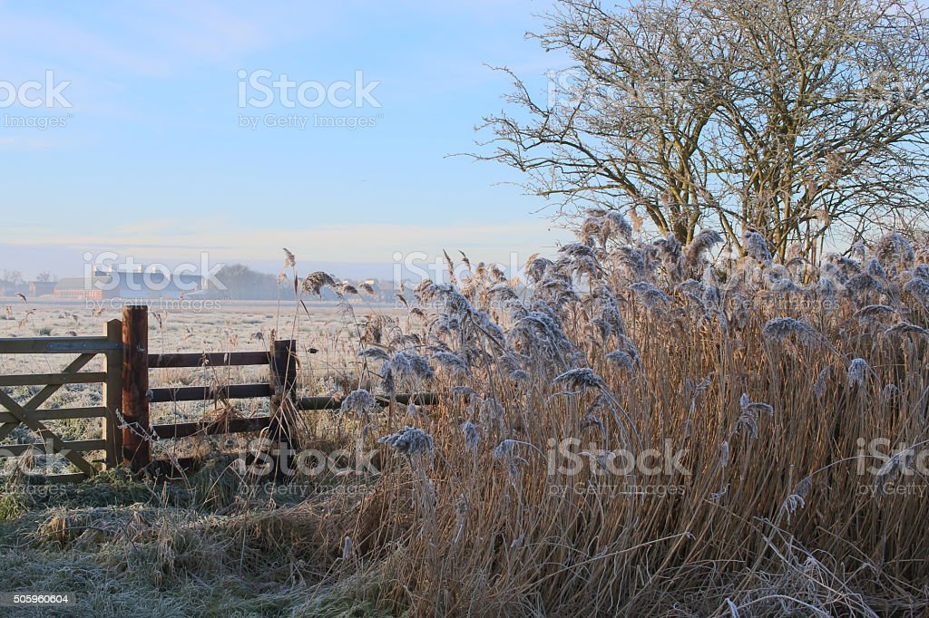 Winter in Suffolk, view towards Snape Maltings across frosty marshes stock photo