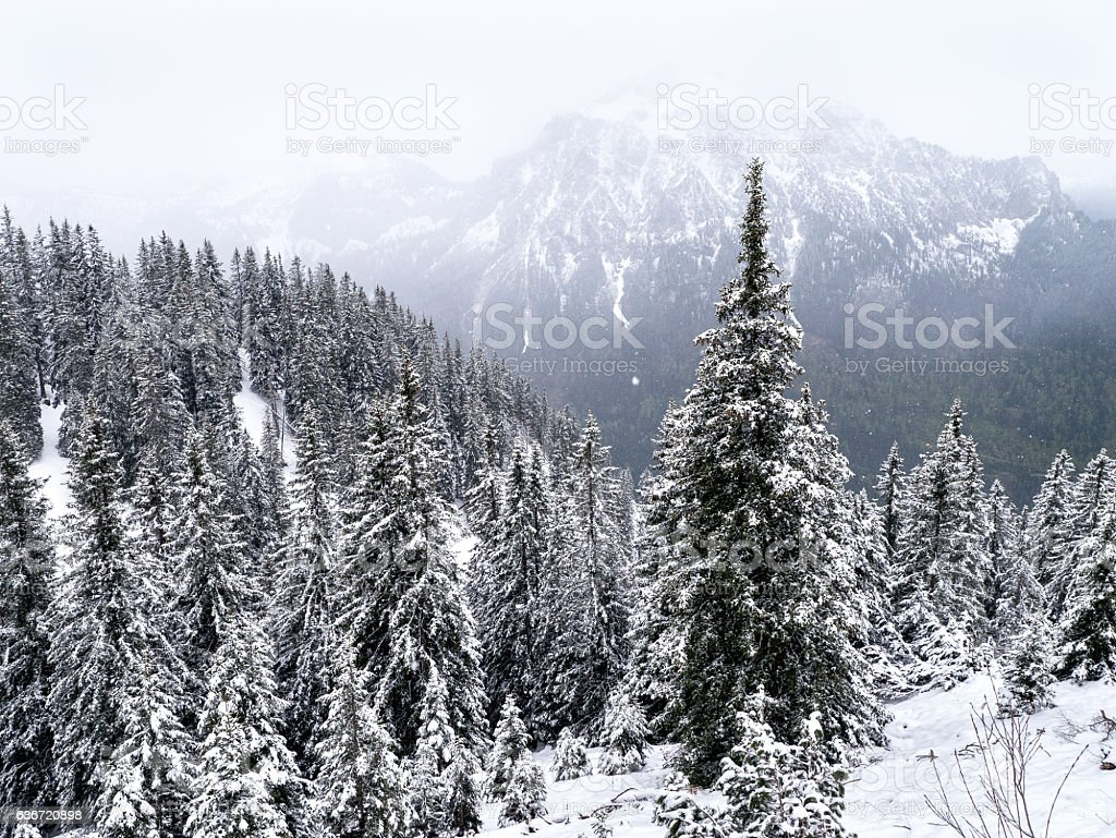 Winter in the Black Forest stock photo