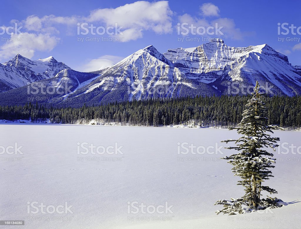 Winter in the Canadian Rockies royalty-free stock photo