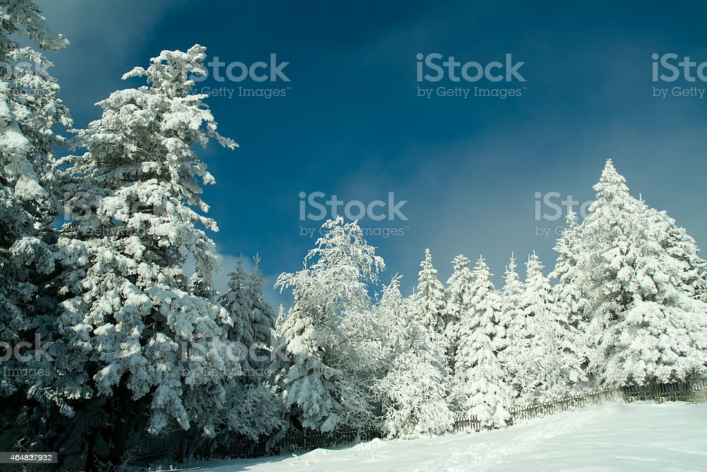 Winter in the forest stock photo