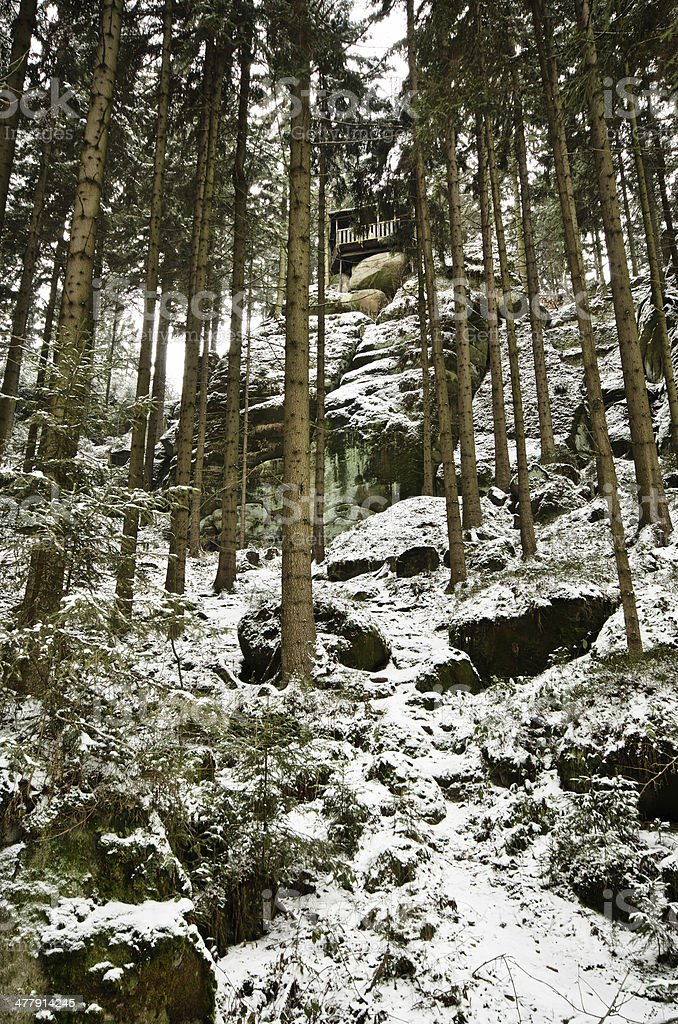 Winter in the forest royalty-free stock photo