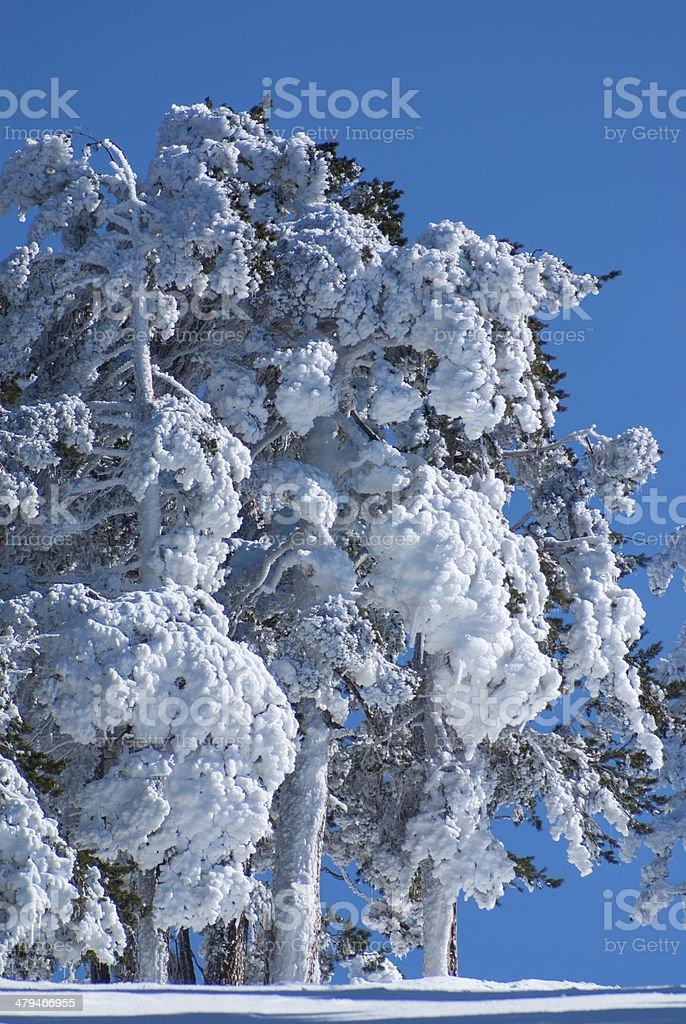 Winter in the mountain navacerrada madrid,spain stock photo