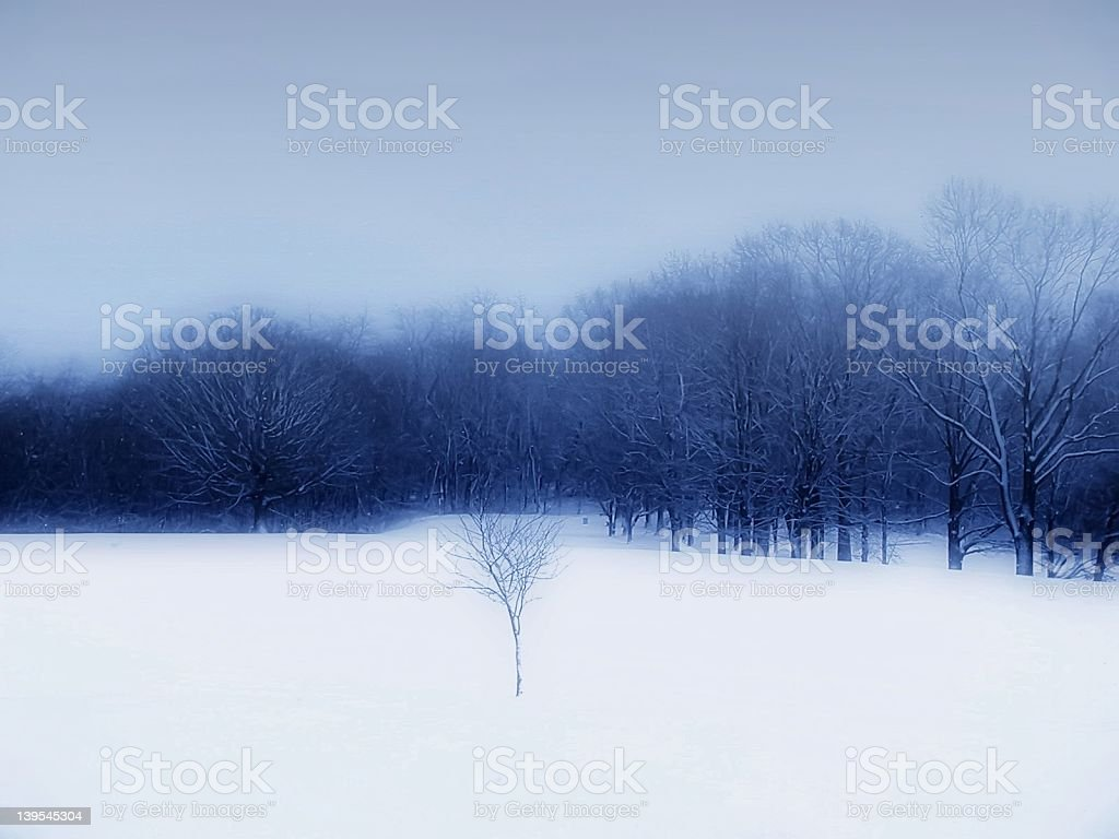 Winter in the Park 2 stock photo