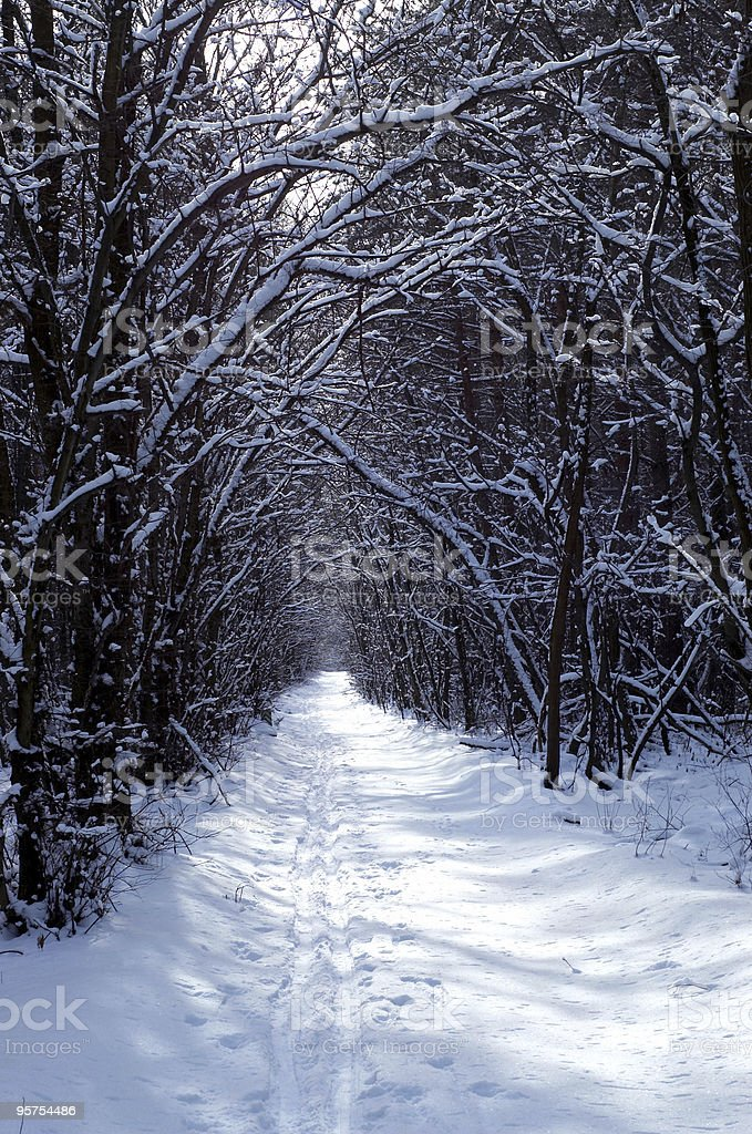 Winter in the park royalty-free stock photo