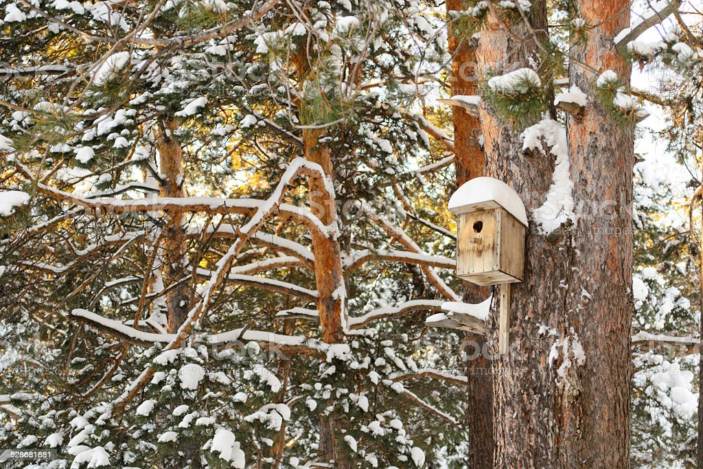 Winter in the Siberian forest stock photo
