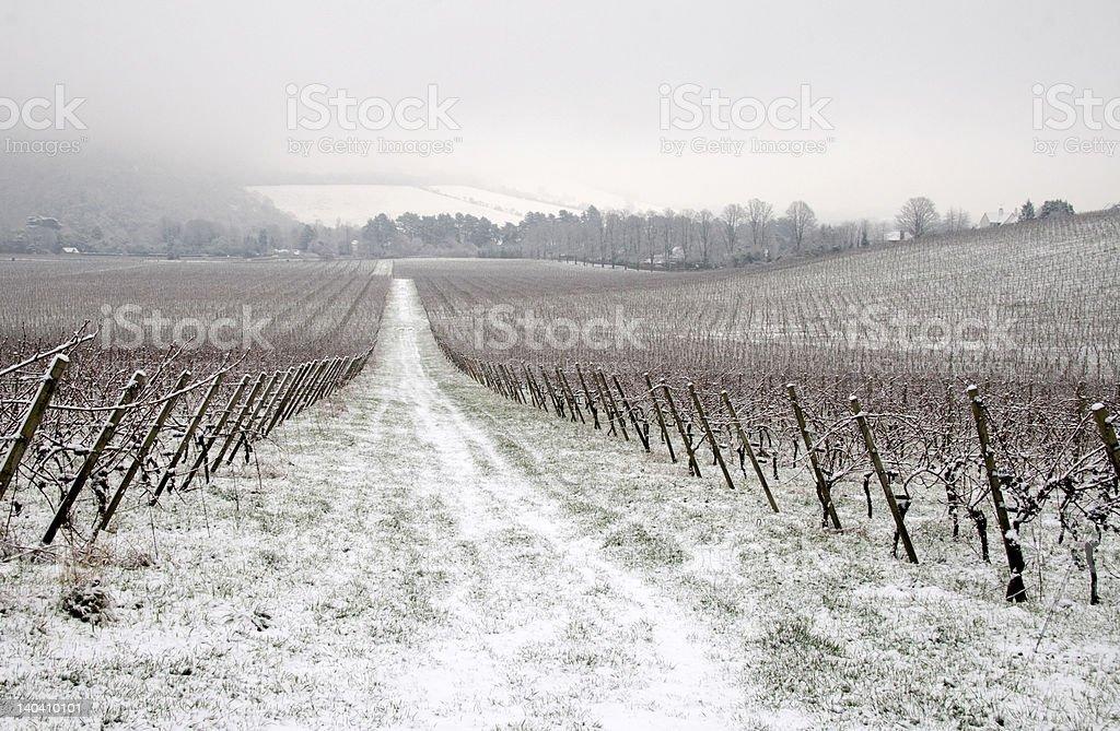 Winter in vineyard royalty-free stock photo