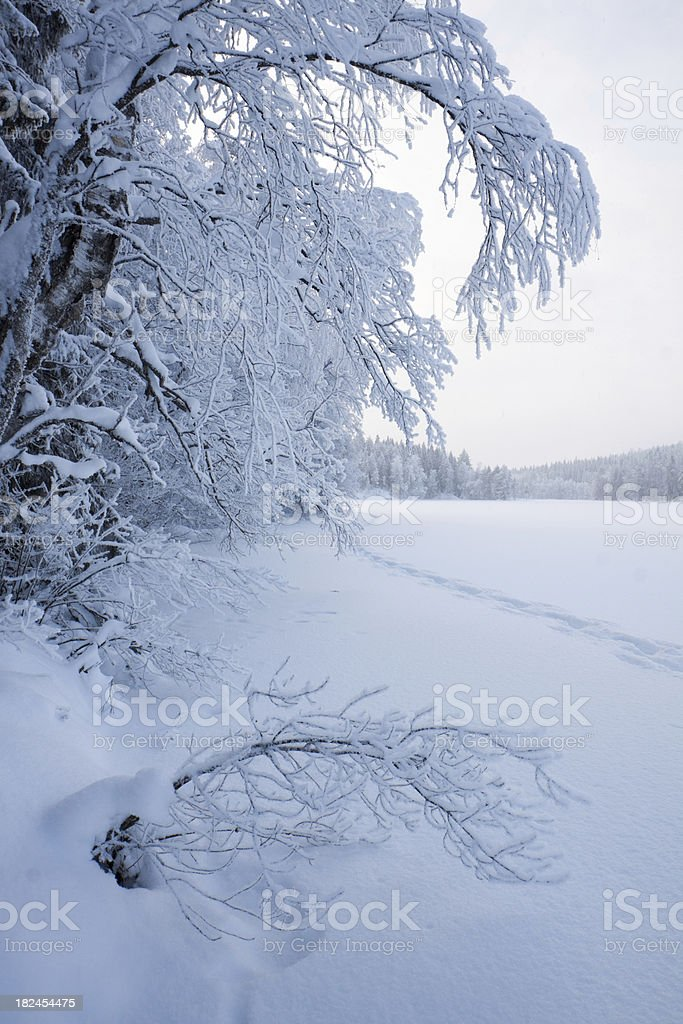Winter Lake royalty-free stock photo