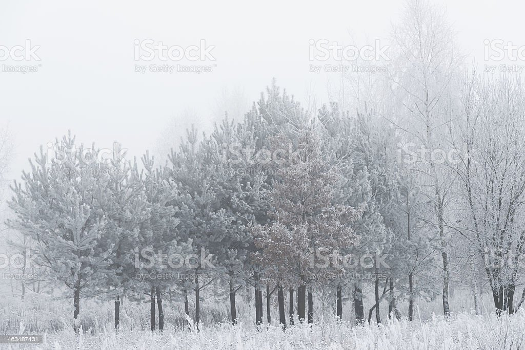 Winter Landscape - 36 Mpx royalty-free stock photo
