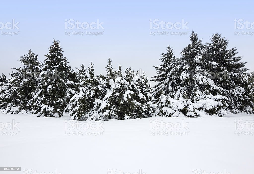 Winter landscape after the snowstorm royalty-free stock photo