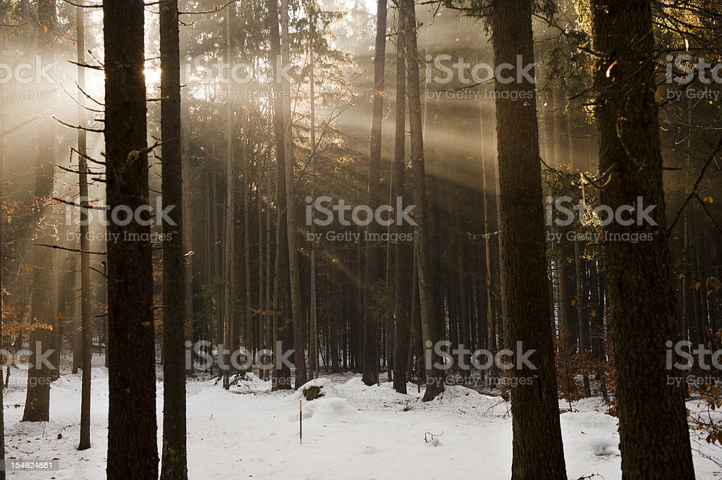 Winter landscape and beautiful sunbeams royalty-free stock photo