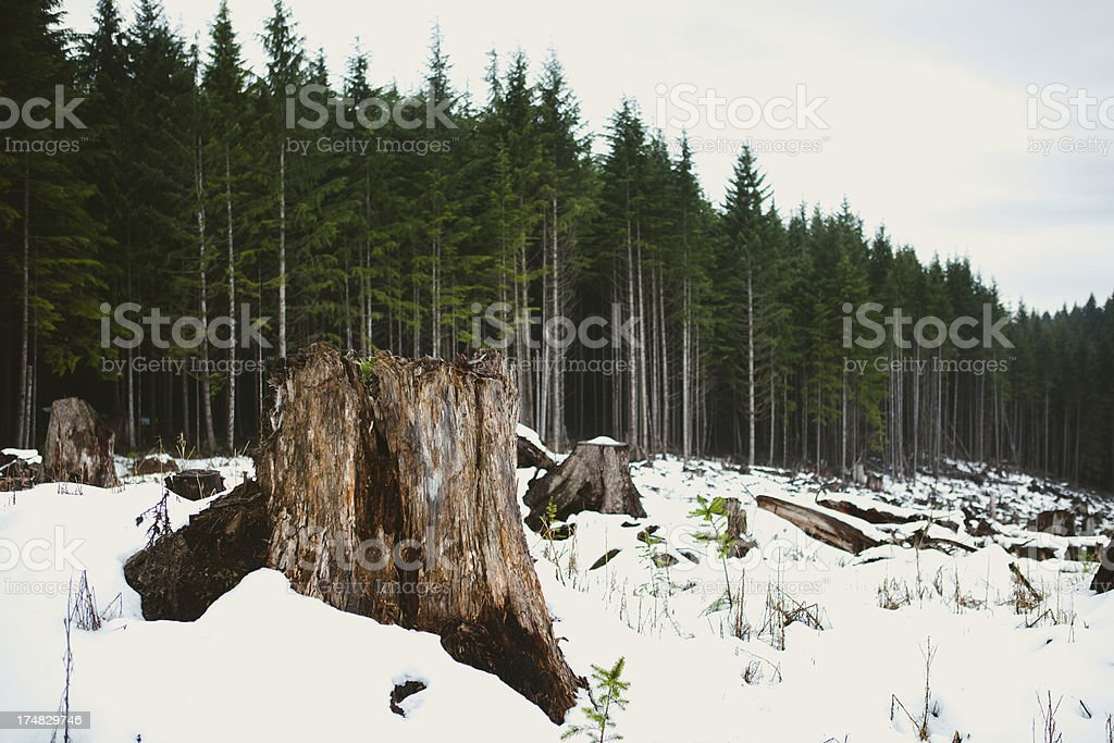 Winter landscape and Tree Stump royalty-free stock photo