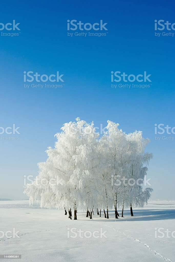 Winter landscape and trees royalty-free stock photo
