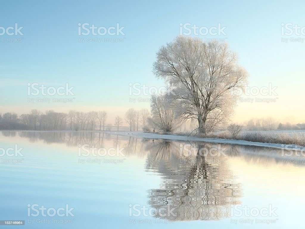 Winter landscape of frozen trees backlit by the rising sun. Photo...