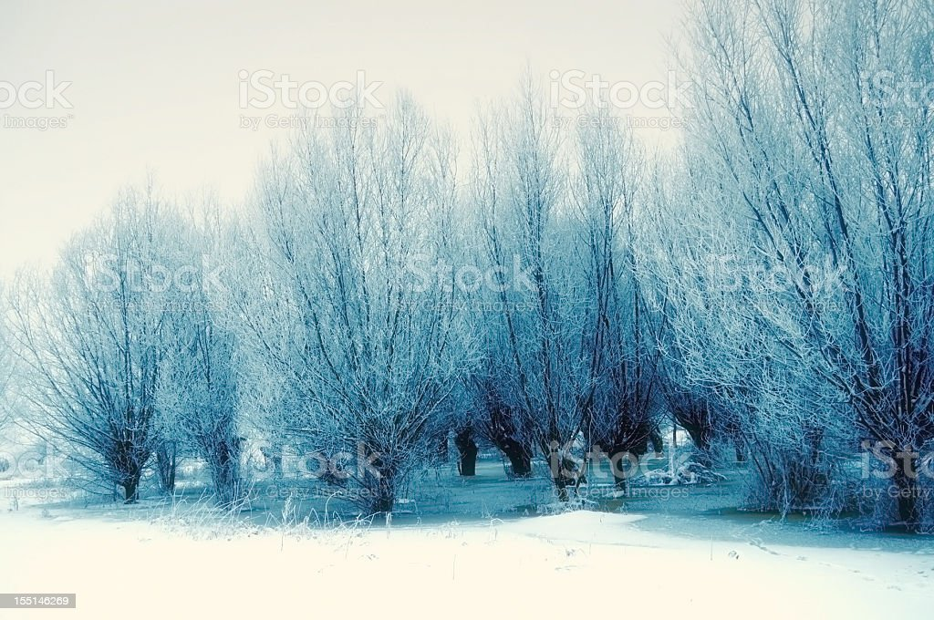 winter landscape at Havel River (Germany) stock photo
