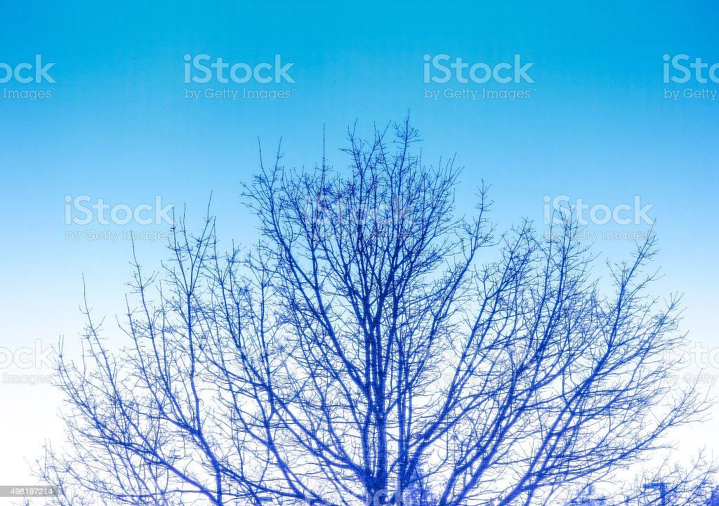 Winter Landscape - barren tree stock photo