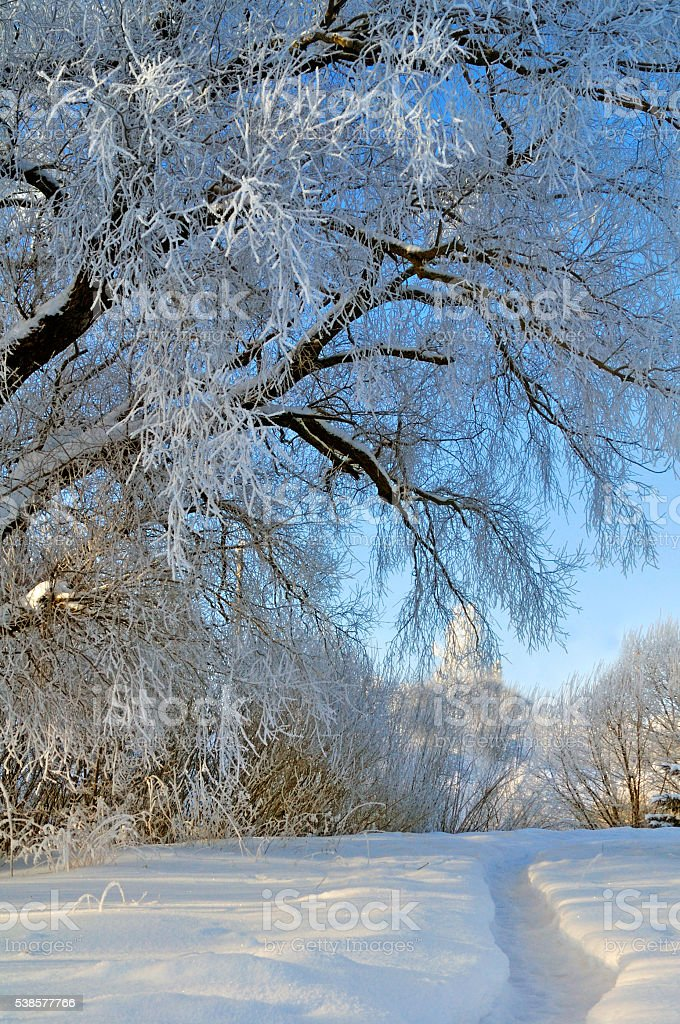 Beautiful winter landscape - frosty trees in cold sunny weather