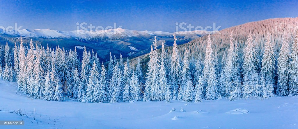 Winter landscape glowing by sunlight. Dramatic wintry scene. stock photo